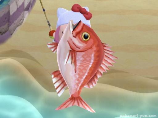 あつもり魚レア度